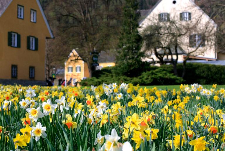 Der Murhof im Frühling (Video)